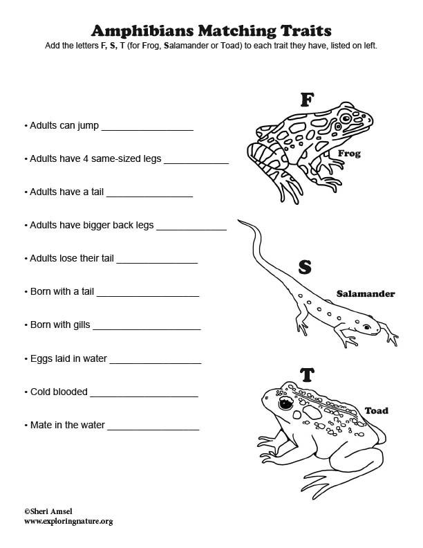 Amphibians Matching Traits Quiz