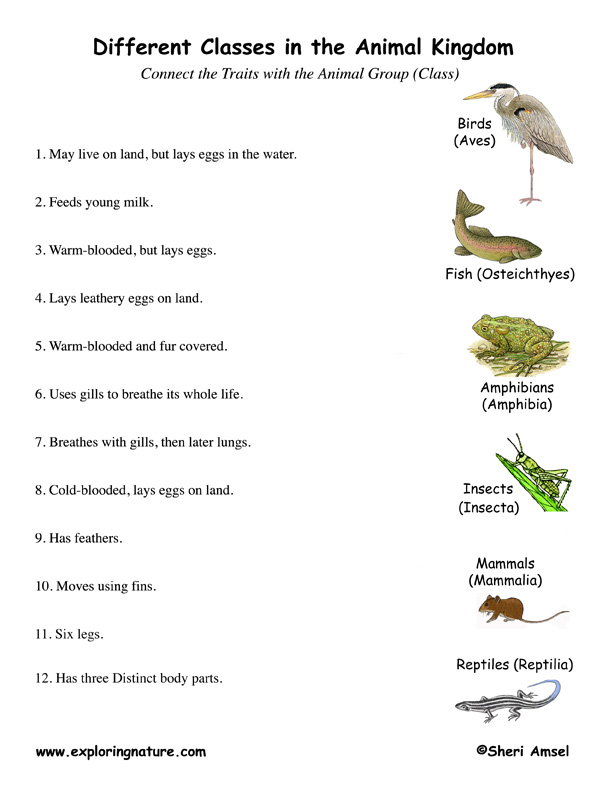 Groups Classes Matching Quiz – Animal Groups Worksheets