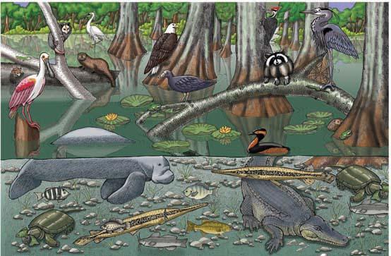 Everglades - Multiple Choice Quiz