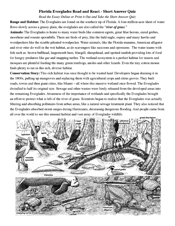 Everglades Reading page