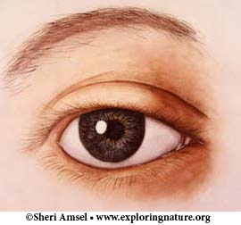 Eye - Vision and Structure - Multiple Choice