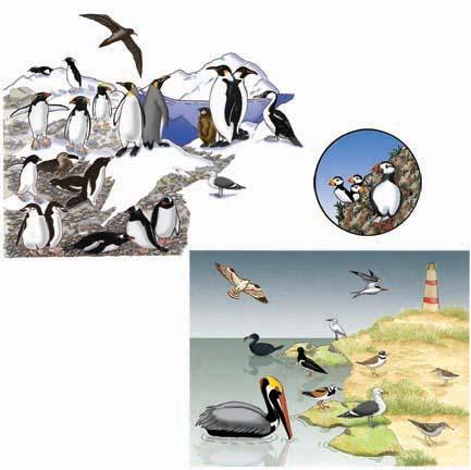 Ocean Birds - Matching Quiz