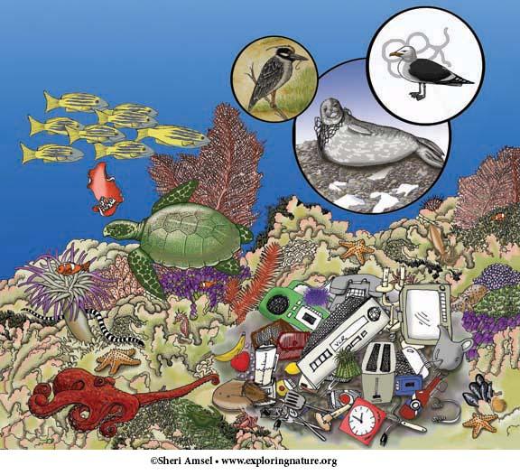 Ocean Ecology - Multiple Choice Quiz