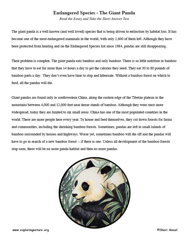 Endangered Species - The Giant Panda  – Read and React