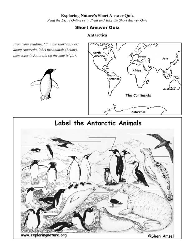 Antarctica - Read and React