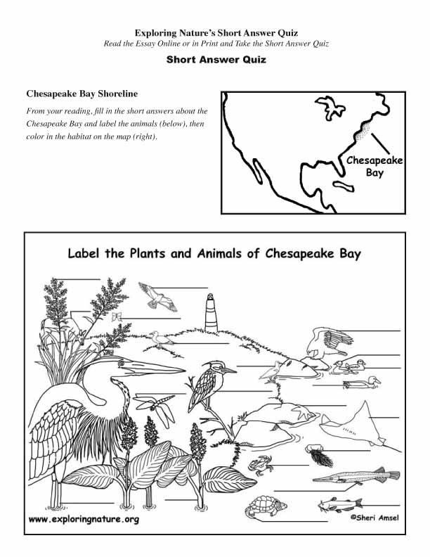 Chesapeake Bay - Read and React Quiz