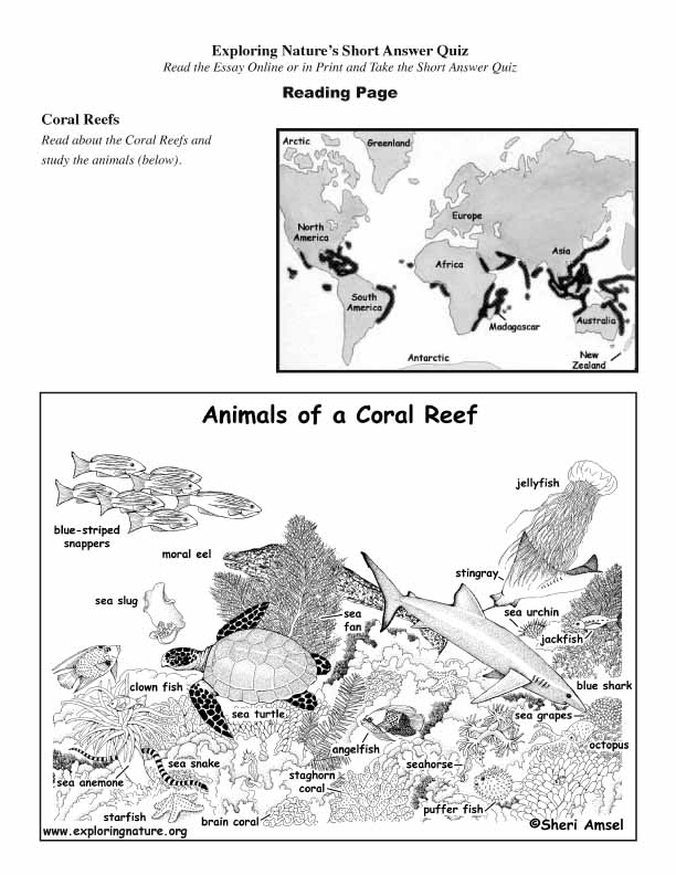 Coral Reefs - Read and React (Short Answer)