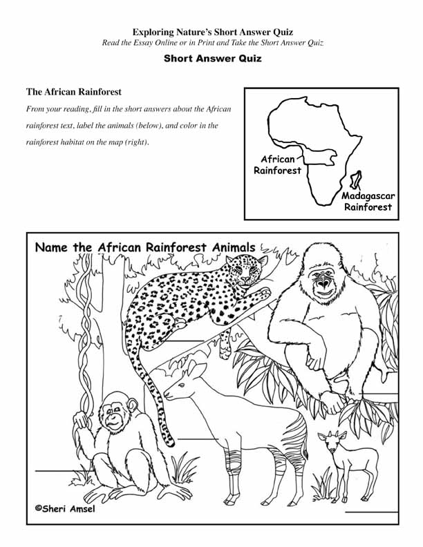 African Rainforest - Read and React Quiz