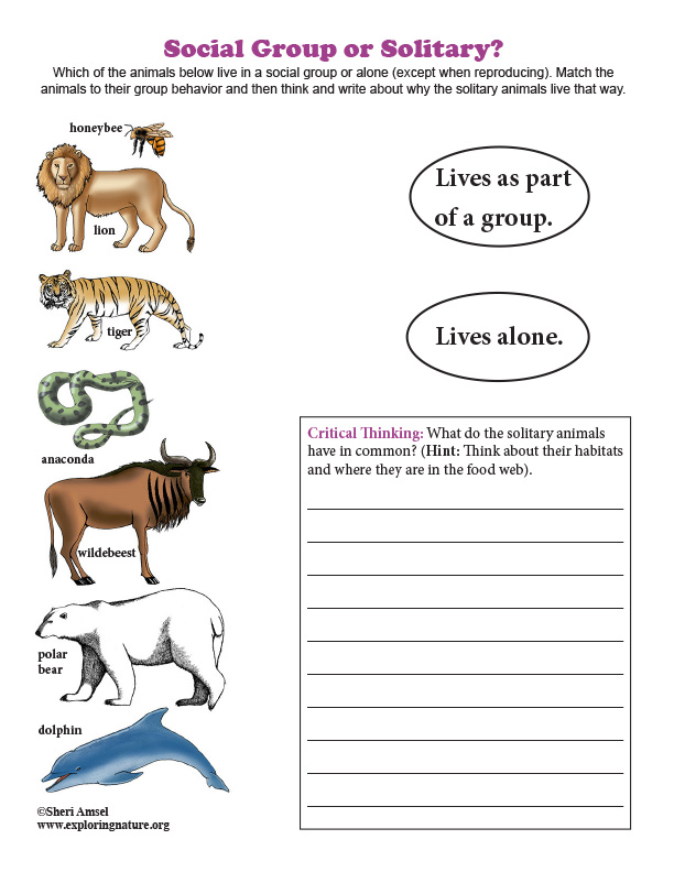 Social Group or Solitary? Matching and Critical Thinking Quiz