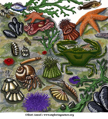 Intertidal Zone - Multiple Choice Quiz