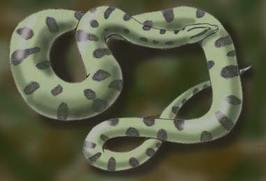 Bolivian anaconda