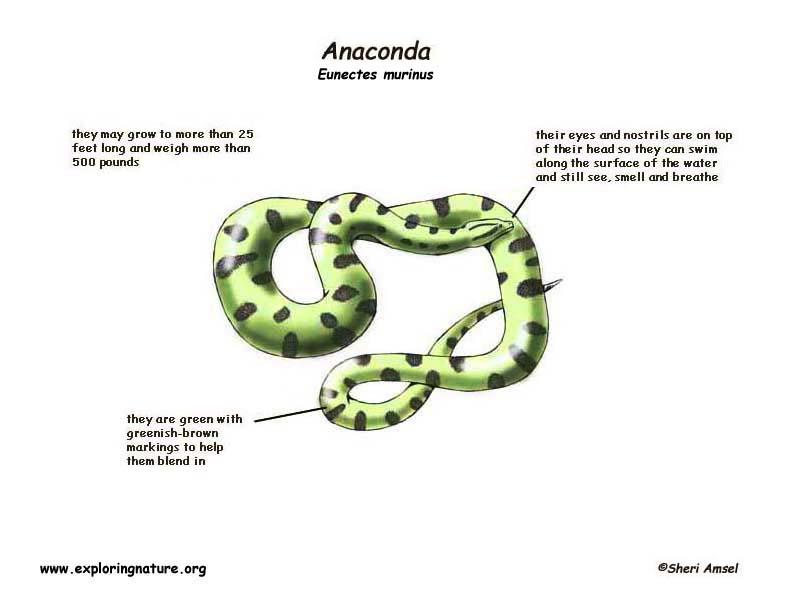Anaconda Snake Body Parts Modern Clipart