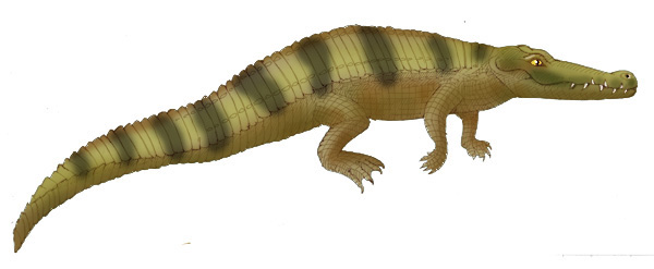 Crocodile (Nile)