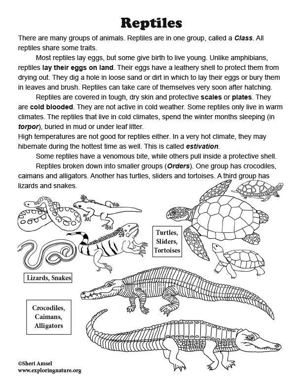 Reptiles Read and react