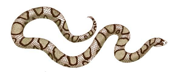 Snake (Milk)