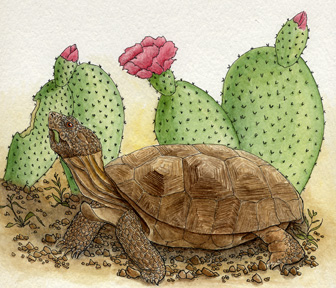 characteristics of the desert tortoise Common name - desert tortoise characteristics desert tortoises have high-domed shells that range from tan or yellowish tones to brown, along with thick skin covering their bodies and scaly heads.