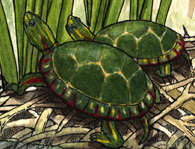 Turtle (Painted)
