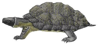 Turtle (Wood)