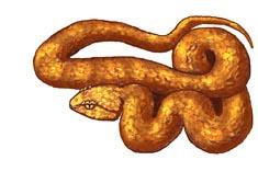 Snake (Eyelash Viper)