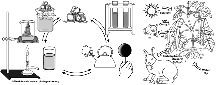 Science Processes Coloring Pages