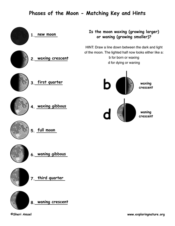 Printables Moon Phases Worksheet phases of the moon explained as seen from earth