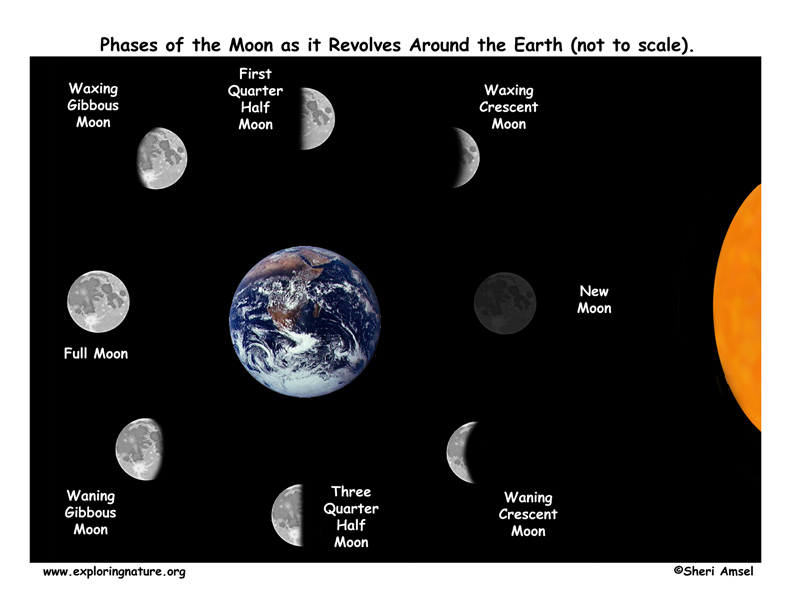 Phases of the Moon as Seen from Earth