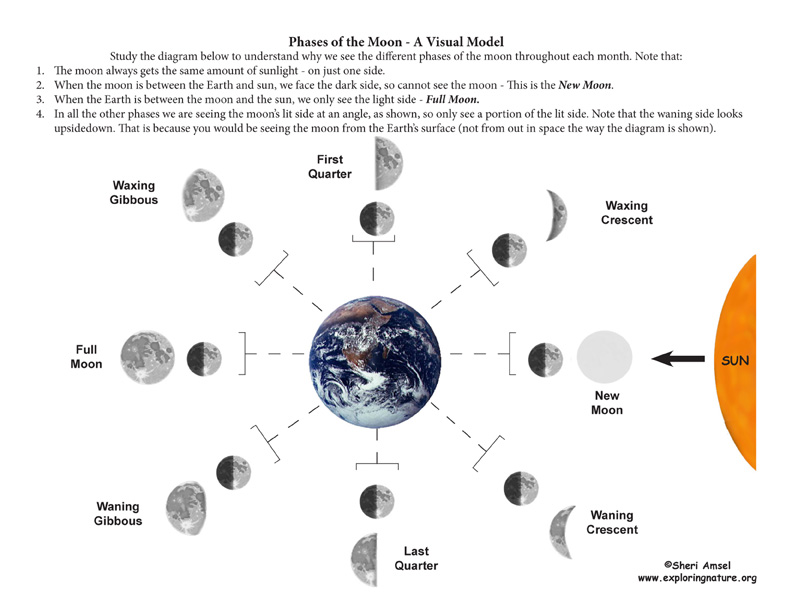 Moon Phases Diagram Phases of The Moon a