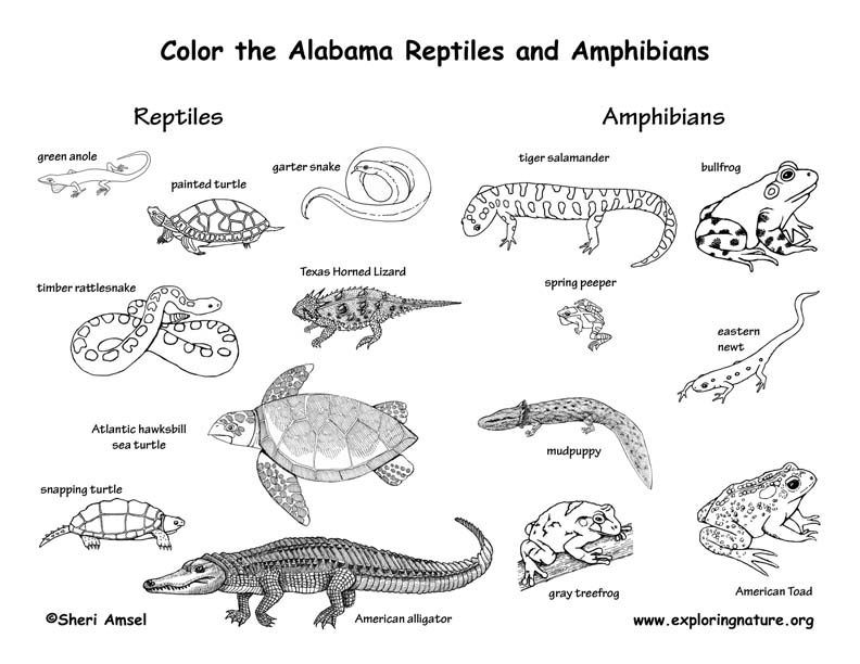Types Of Reptiles List