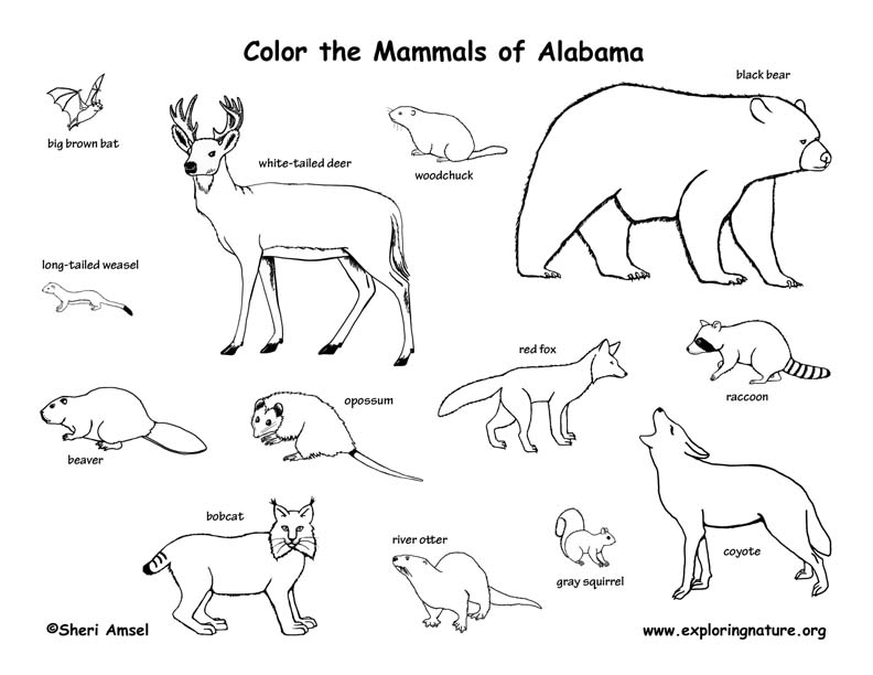 Vertebrate Animals Coloring Pages : Alabama
