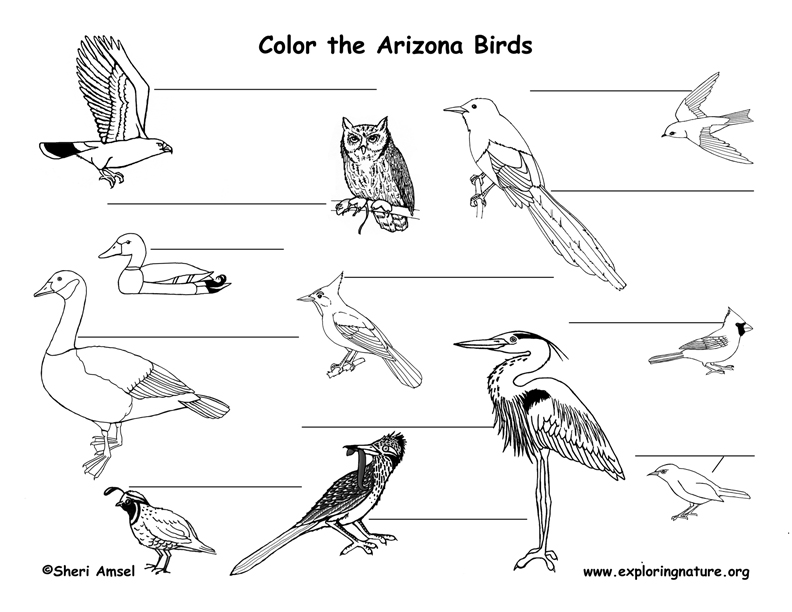 Arizona birds labeling page
