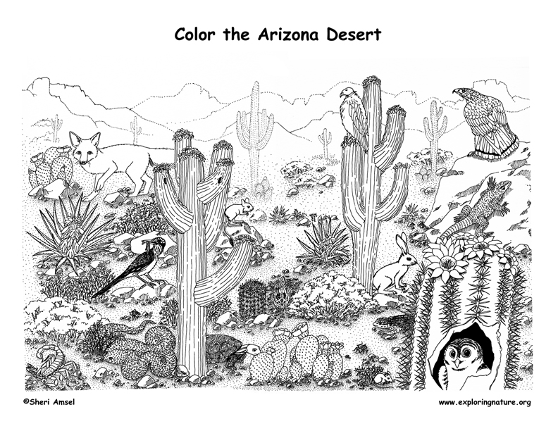 Arizona desert coloring page