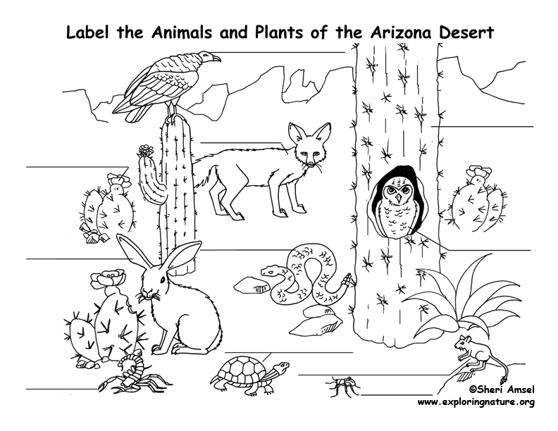 animal habitat coloring pages desert animals coloring pages