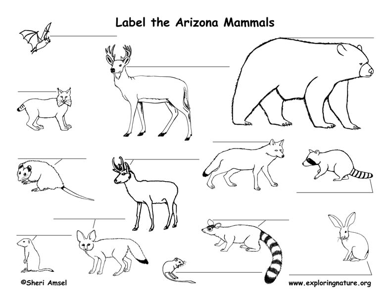Arizona mammals labeling page