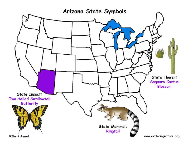 Arizona Habitats Mammals Birds Amphibians Reptiles