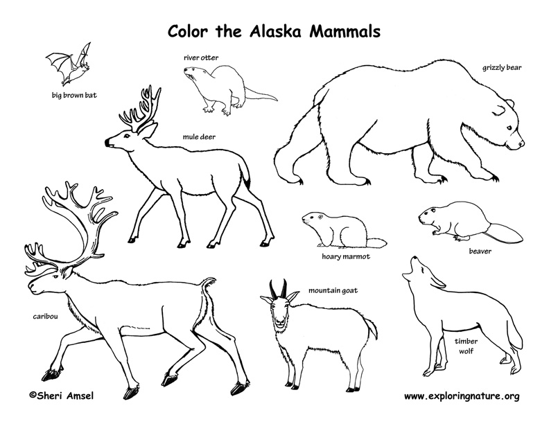 Alaskan Animal Coloring Pages