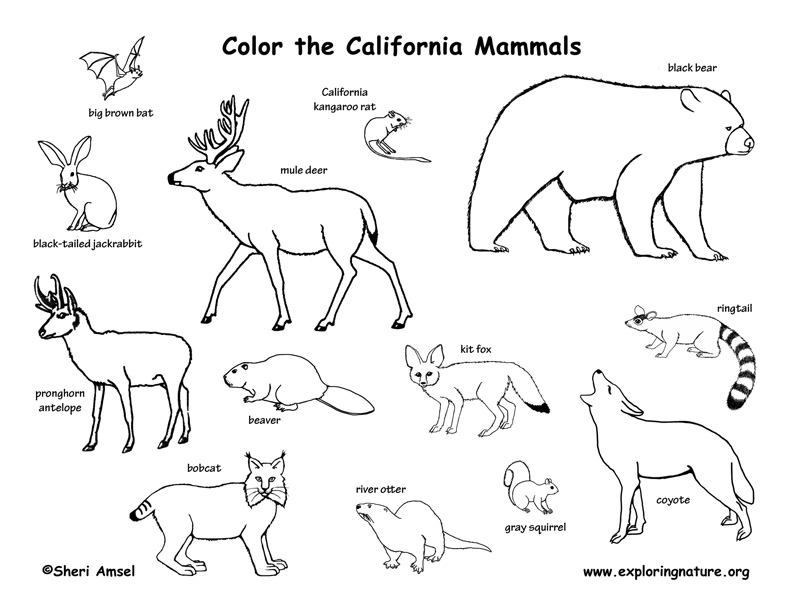 California Habitats, Mammals, Birds, Amphibians, Reptiles Mammals Clipart Black And White