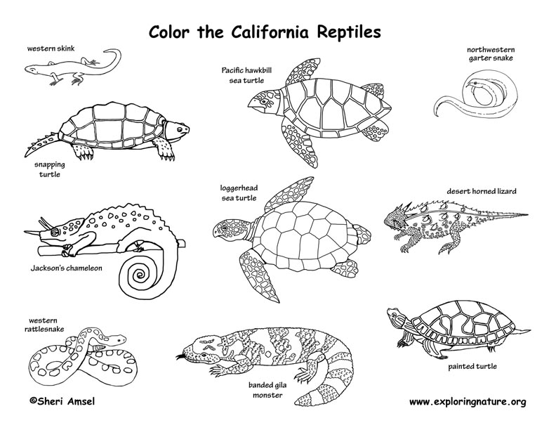 California habitats mammals birds amphibians reptiles for Snakes coloring pages