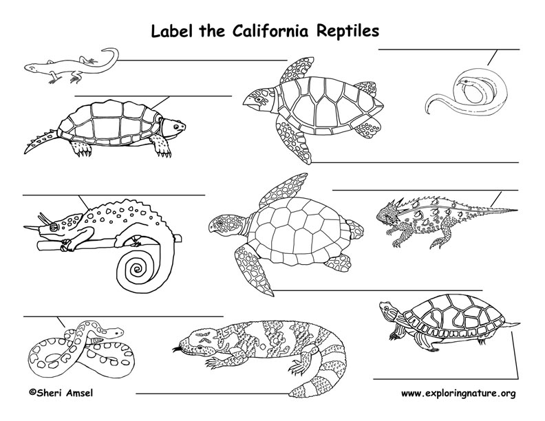 California Reptiles Labeling Page