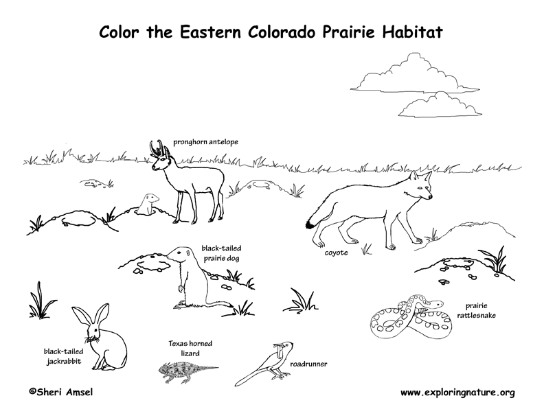 Colorado for Prairie dog coloring page