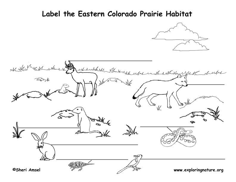 a look at the feeding habits and habitat of frogs It includes the frogs and toads, which, because of their wide distribution, are   the markings of a frog may seem bold when observed out of the natural habitat,  but  because of their morphological and physiological adaptations, frogs are  able.