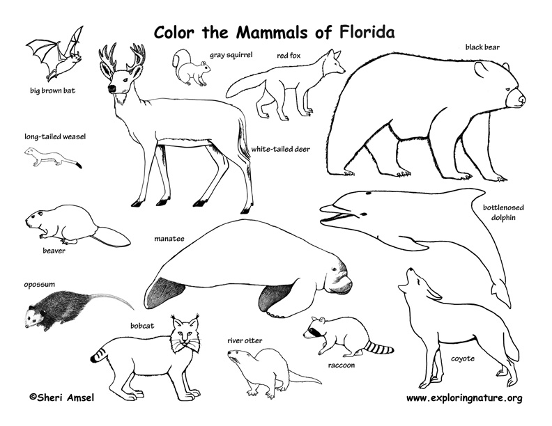 mammals coloring pages - photo#36