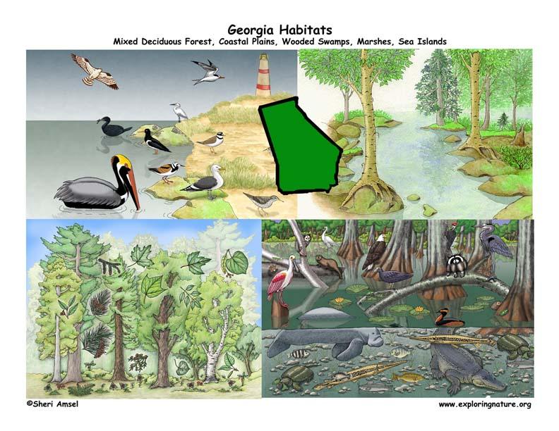 Georgia Habitats Mammals Birds Amphibians Reptiles