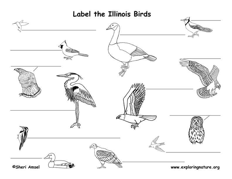 Illinois birds labeling