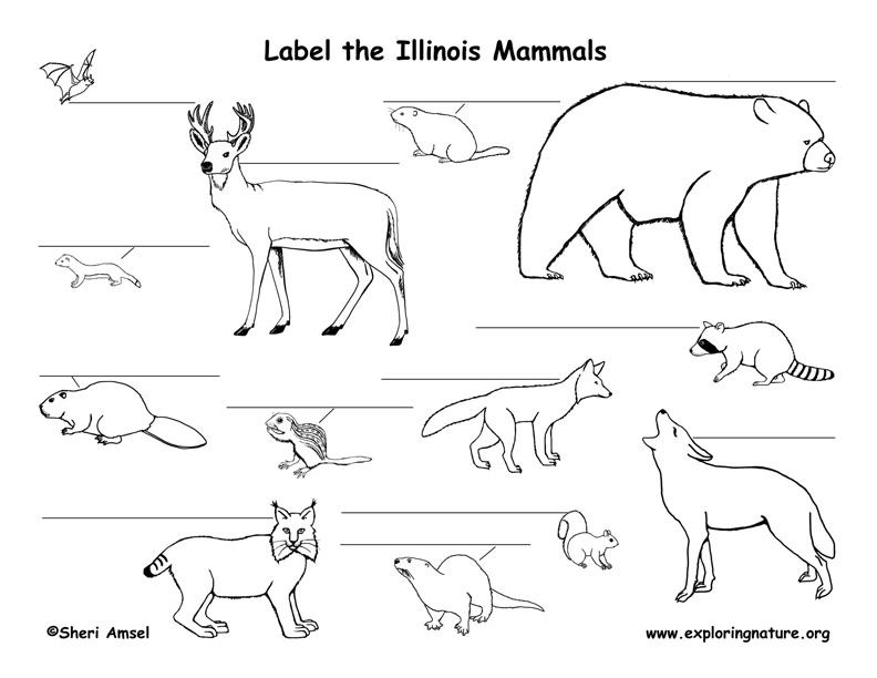 Illinois mammals labeling