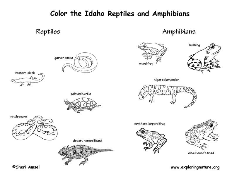 Idaho Habitats Mammals Birds Amphibians Reptiles