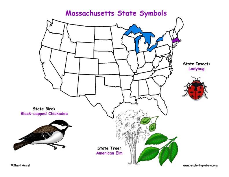 Massachusetts state symbols