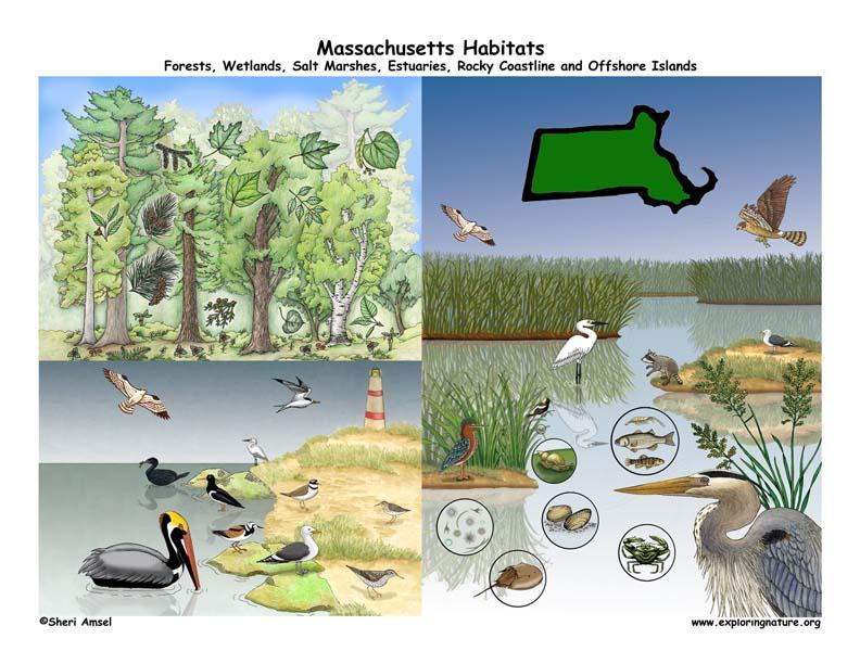 Massachusetts habitat poster