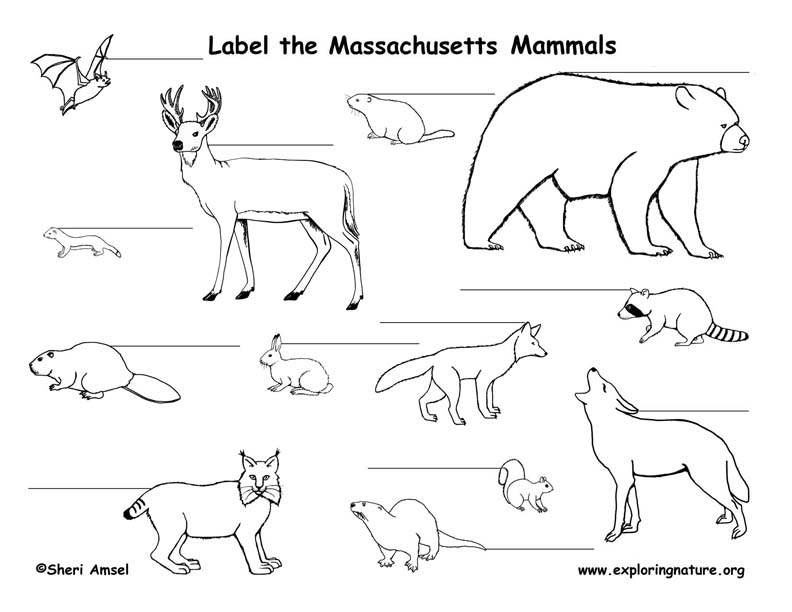 Massachusetts mammals labeling