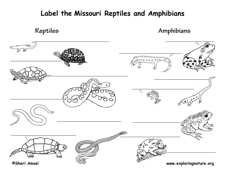 Missouri amphibians and reptiles labeling