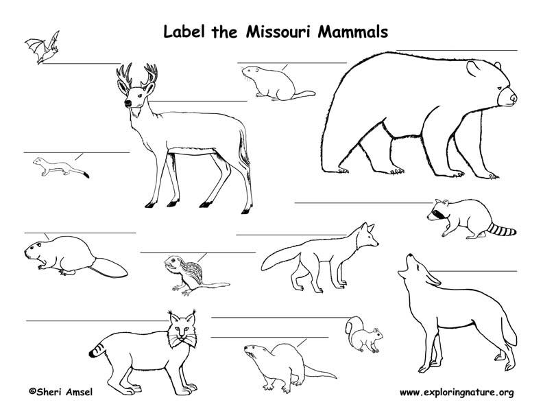 Missouri mammals labeling